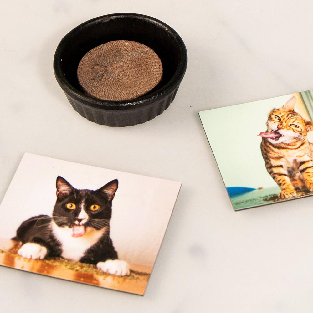 Kattenkruid voor hobbyteelt