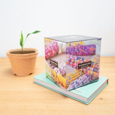 Regenboog maiskolf growing kit