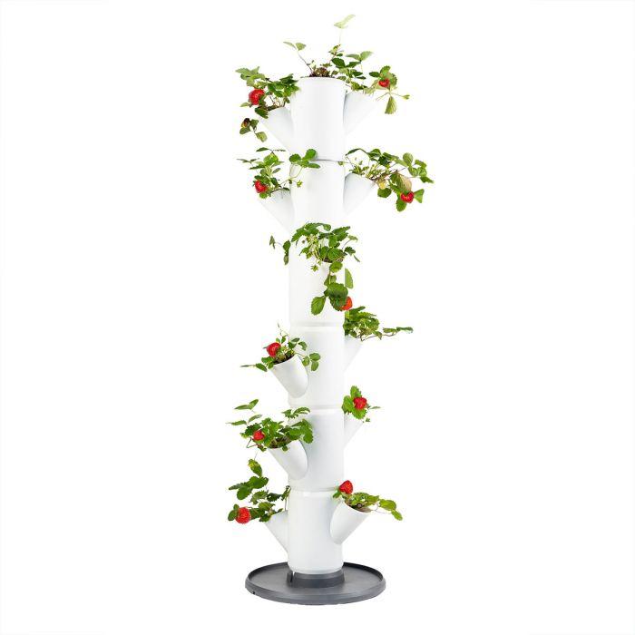 Sissi aardbeiboom voor balkon of terras