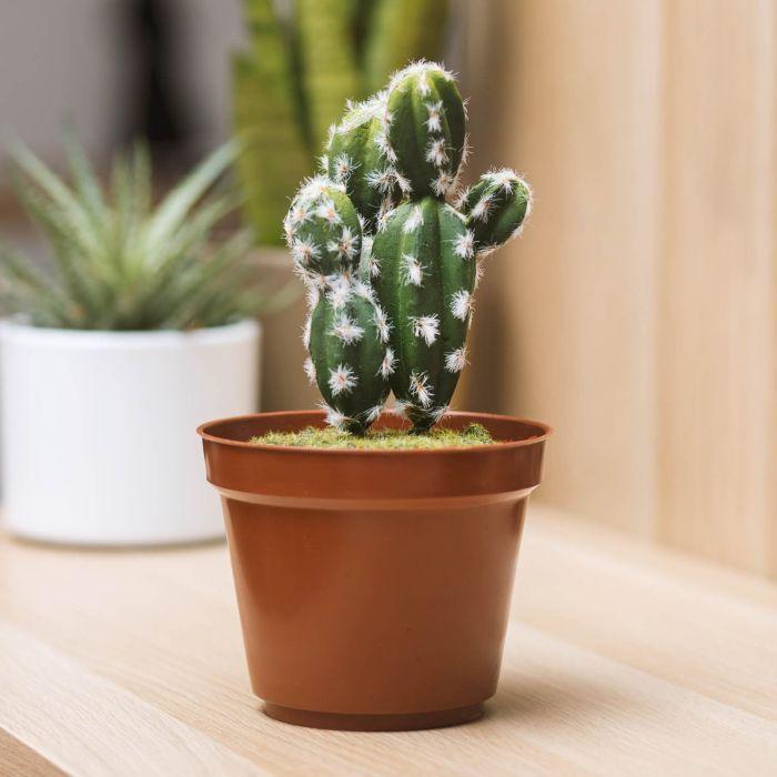 Cactus Mini Kluis