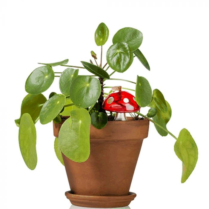 Water champignon voor kamerplanten