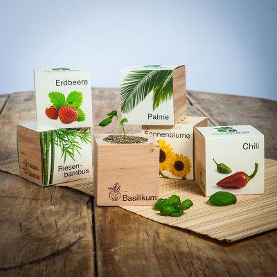Paascadeau - ecocube - planten in houtblokken