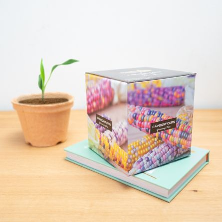 Regenboog maiskolf growing kit