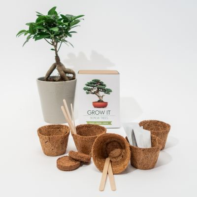 Paascadeau - Grow It Bonsai boom