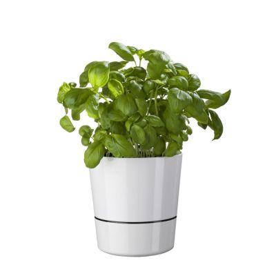 Lente cadeaus - Herb Hydro bloempotten